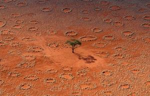 TermiteRings